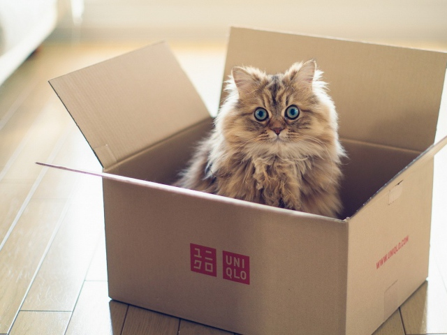 Animals___Cats_Fluffy_cat_in_a_cardboard_box_105532_29